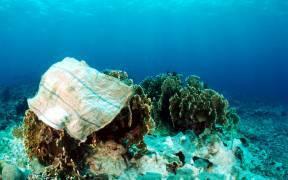 Meeresschutz – Ein blaues Wunder | WWF Schweiz