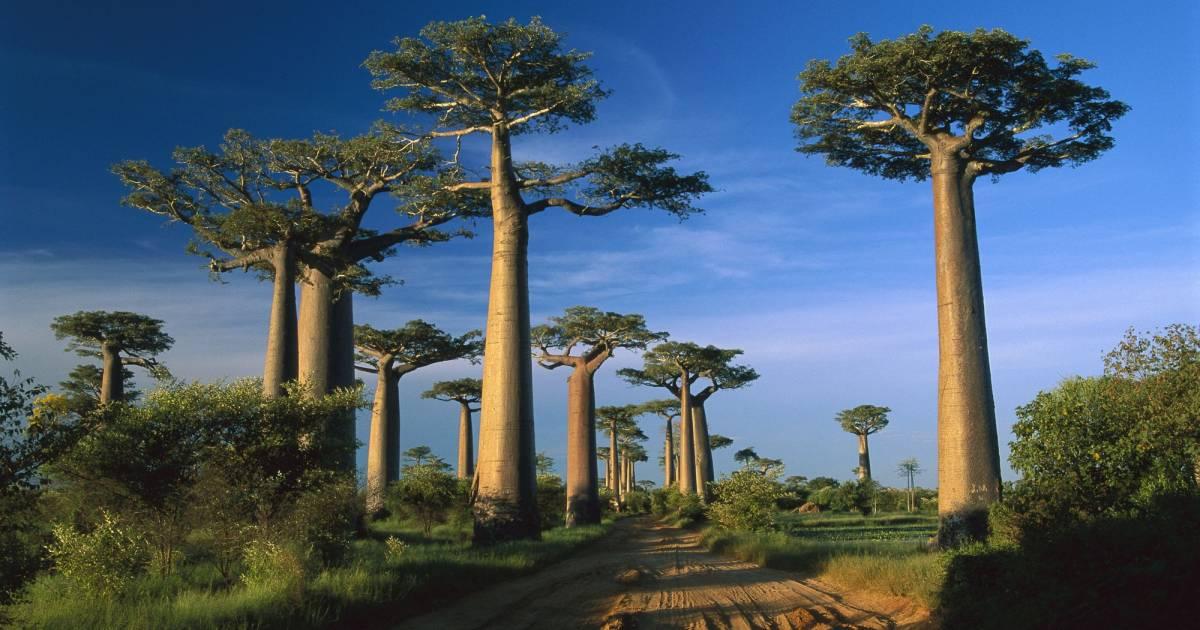 Madagascar - Un paradiso della biodiversità | WWF Svizzera