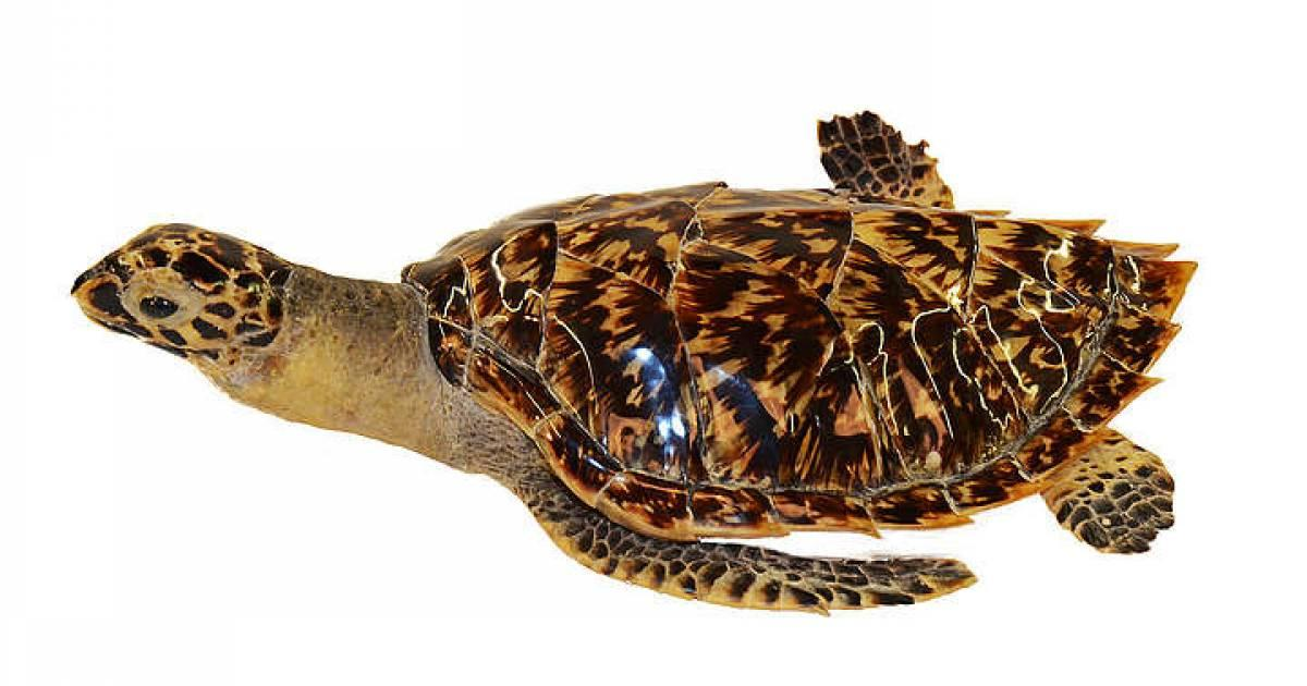 sistema di scambio di tartarughe robot finanziari