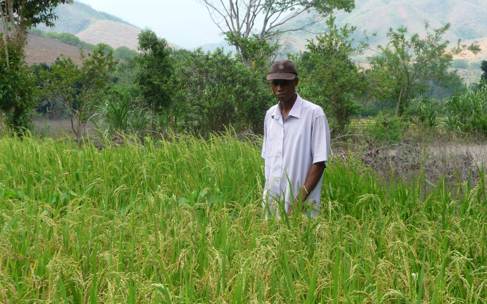 Agricoltore Rice in Madagascar