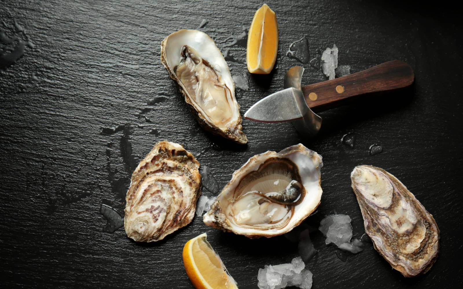 Oysters sea food and fish guide