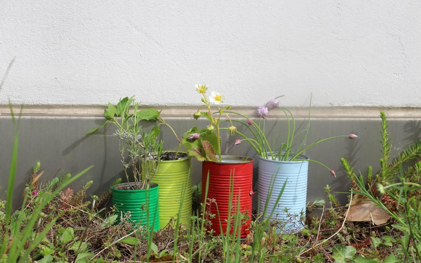 Gärtnern Ohne Garten Wie Aus Alten Verpackungen Kleine Gärten