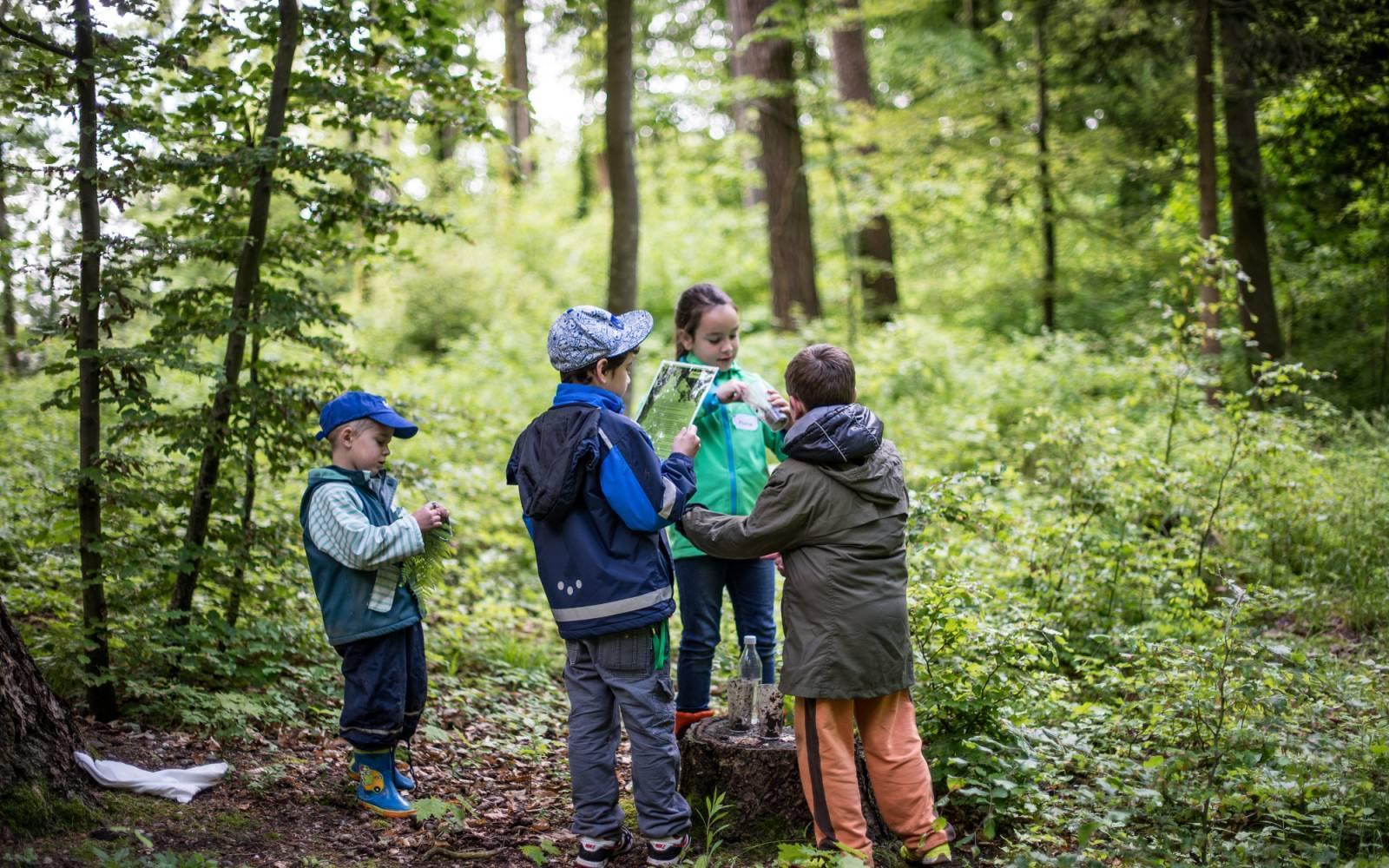 Draussen unterrichten - vier Kinder lösen eine Aufgabe im Wald