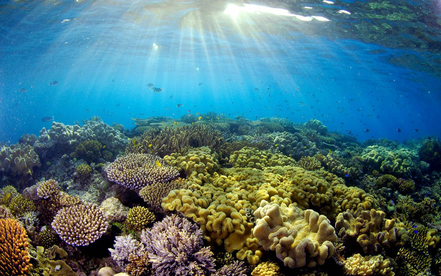 Sonneneinfall auf Korallen, Great Barrier Reef, Quensland, Australien.