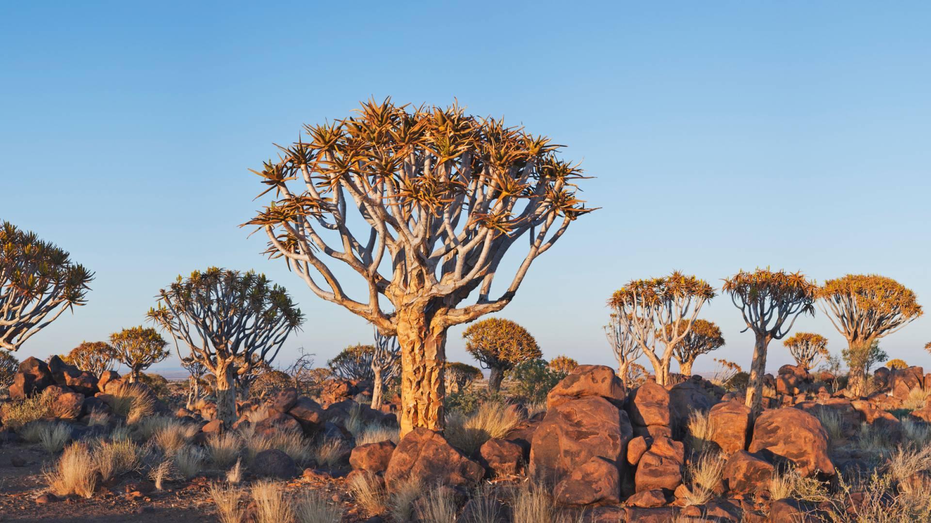 Namibia – 44 Prozent Stehen Unter Naturschutz